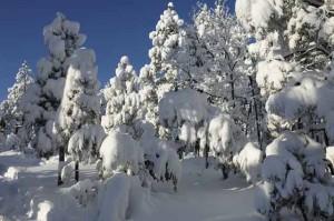Major February Snow Storm