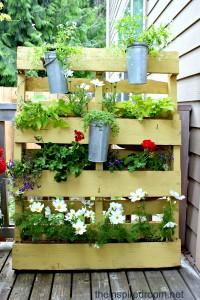plants-in-a-pallet